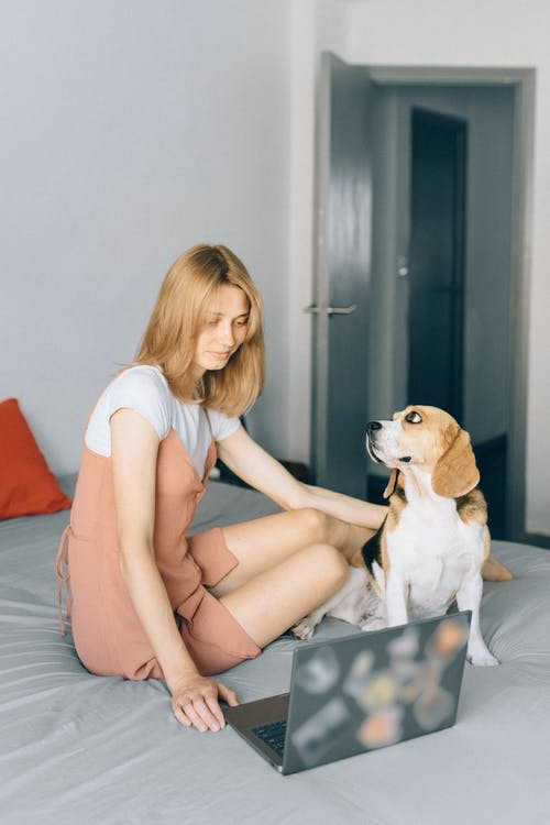 Things You Must Know About how long do beagles sleep