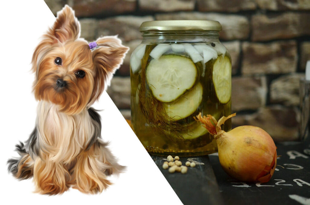Can dogs Have pickles