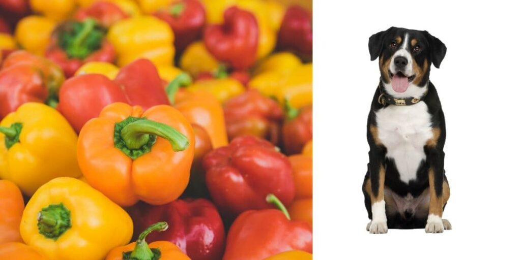 Can dogs eat peppers