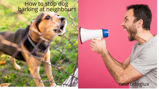 How to stop dog barking at neighbours