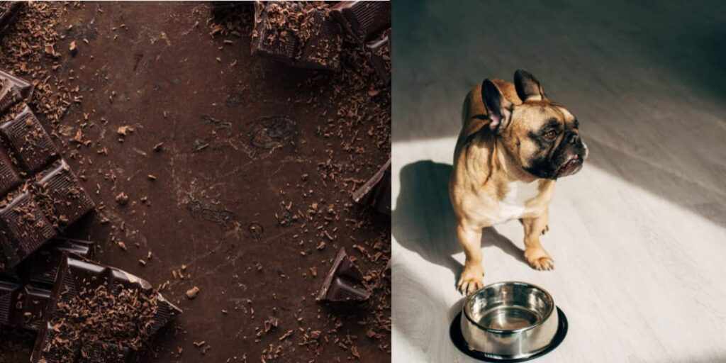 what to do if your dog eats chocolate home remedies