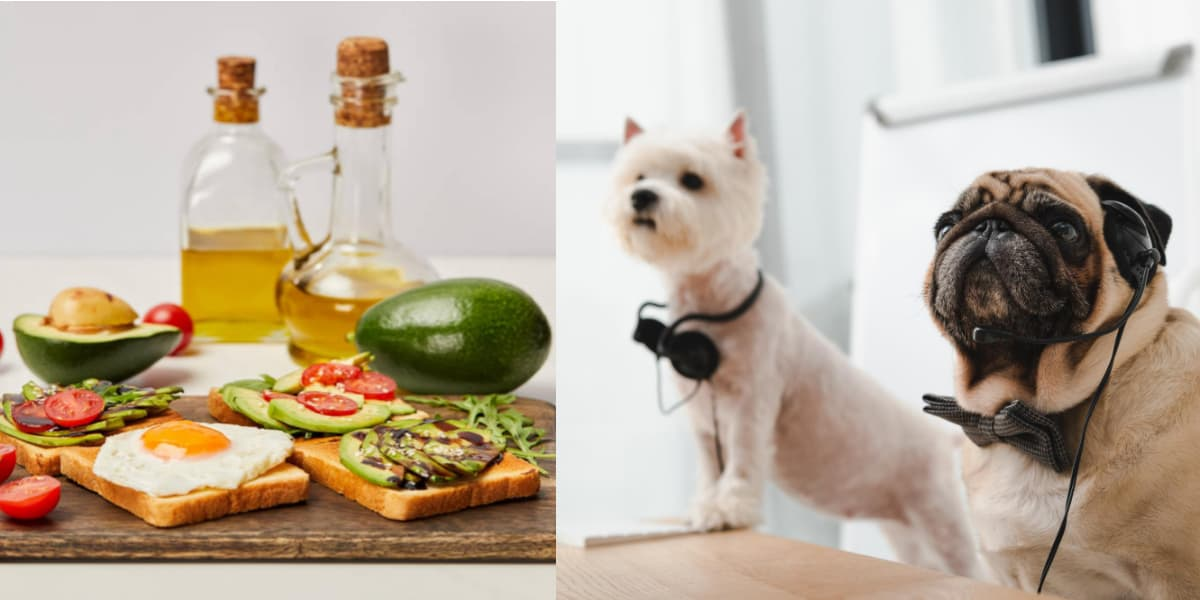 can dogs eat avocado oil