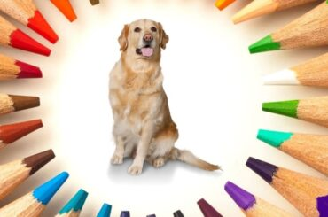 why do dogs eat crayons