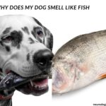 Why does my dog smell like fish 11 Reasons Your Dog Smells Like Fish: