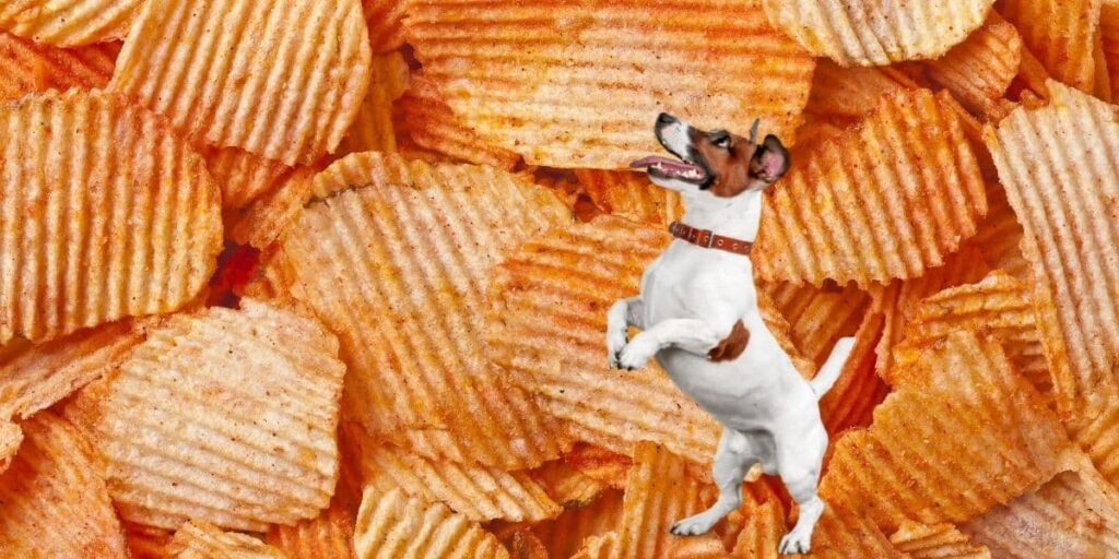 can dogs eat barbecue chips