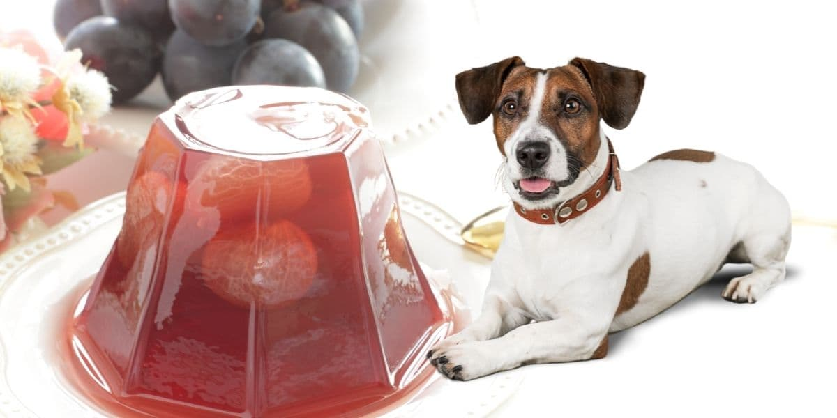 can dogs have grape jelly