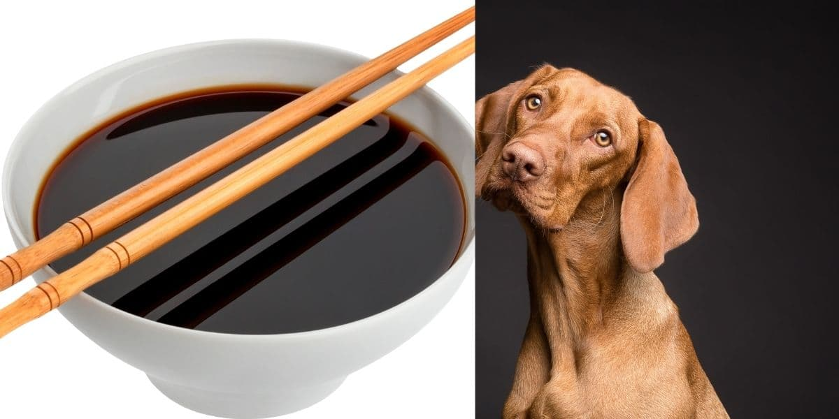 can dogs have soy sauce