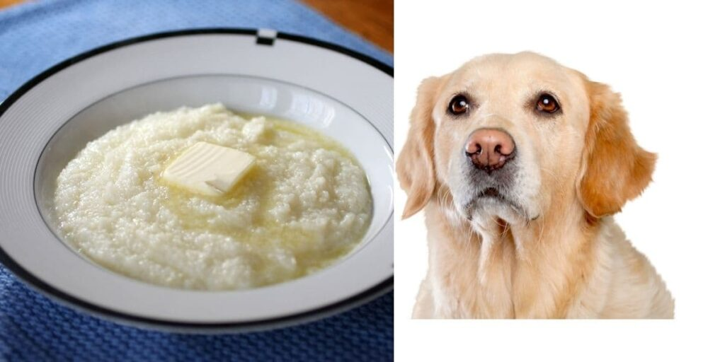 can dogs eat grits