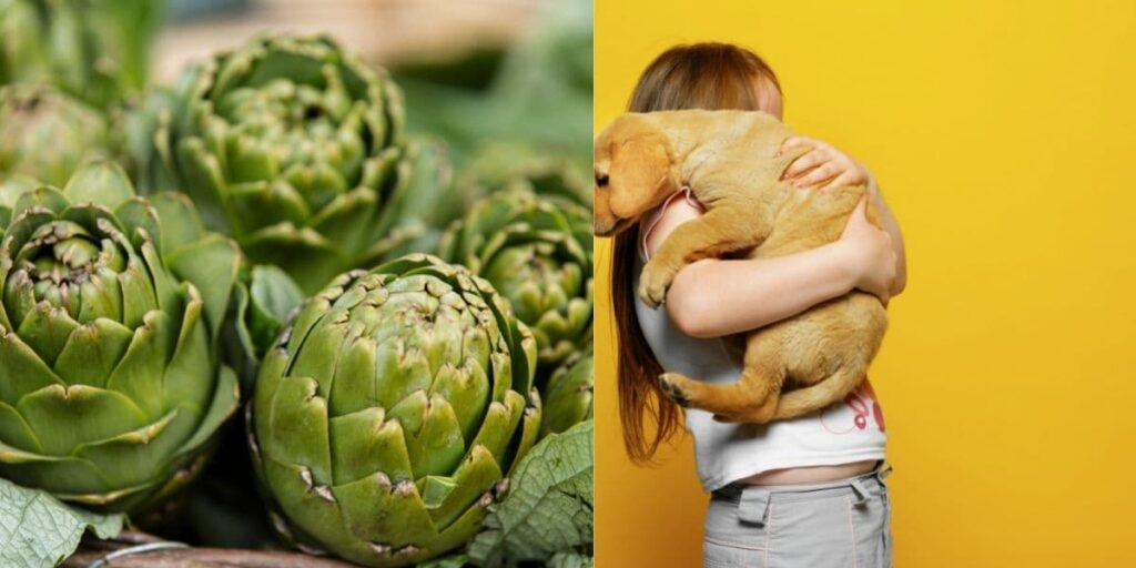 can dogs eat artichokes