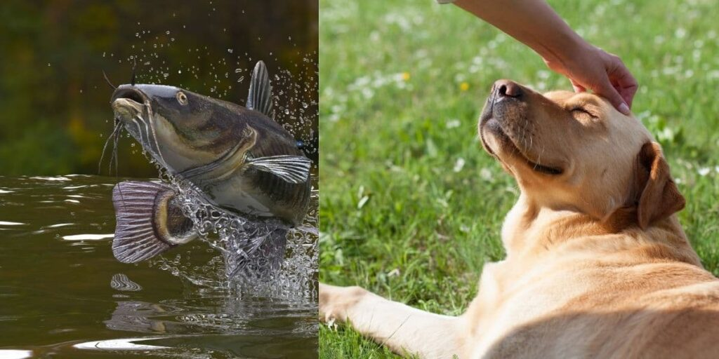 can dogs eat catfish