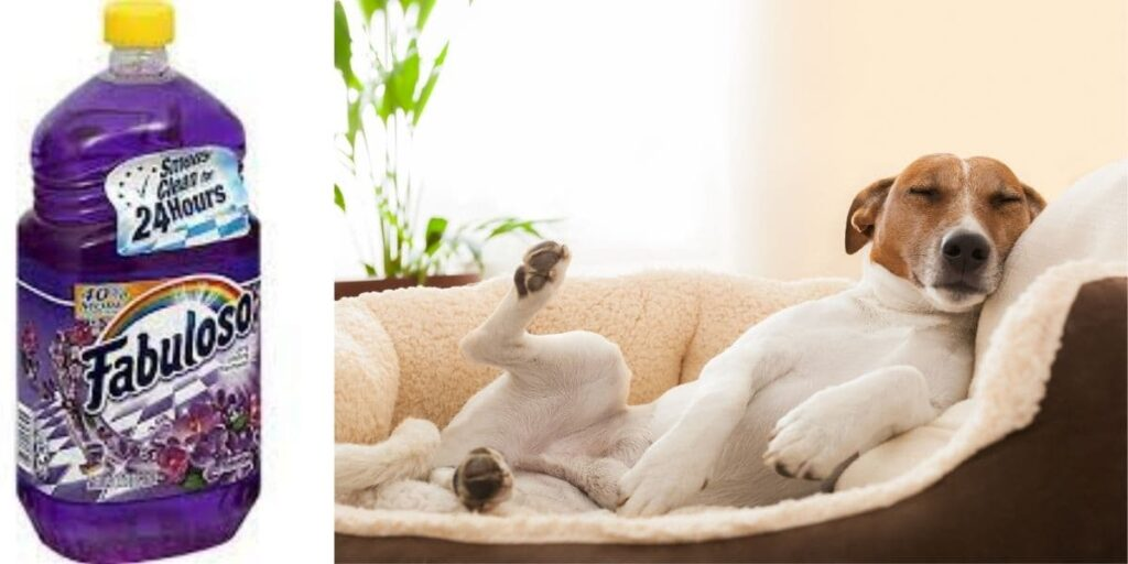 is fabuloso safe for dogs