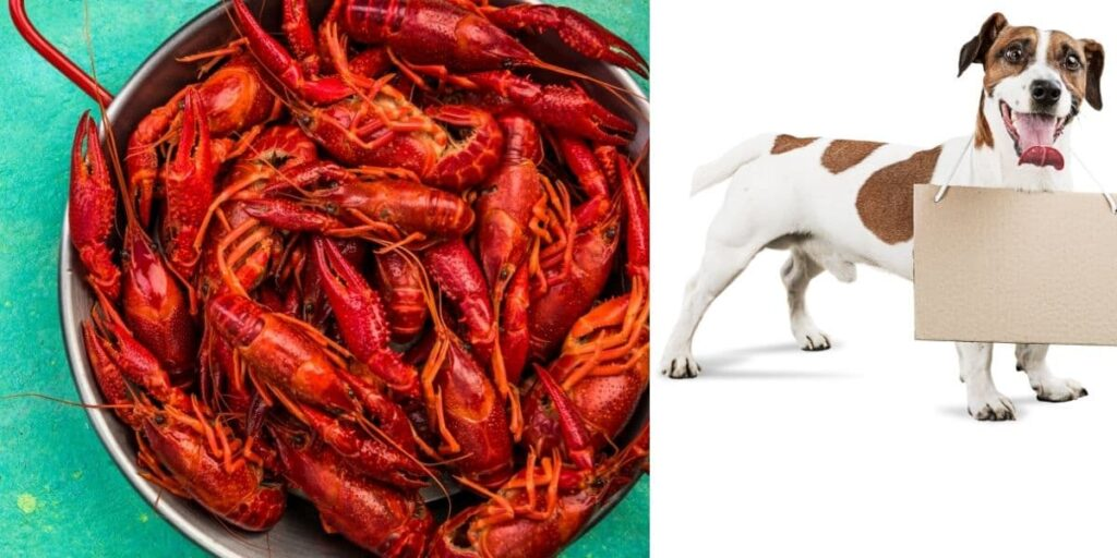 can dogs eat crawfish