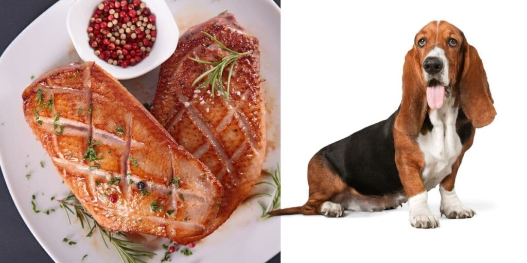can dogs eat duck