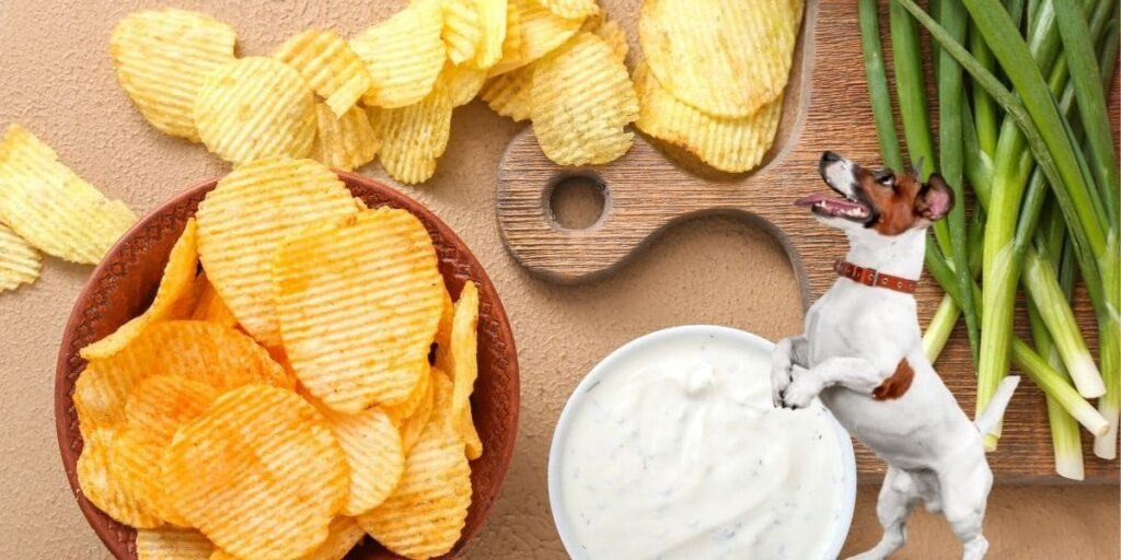 can dogs eat sour cream and onion chips