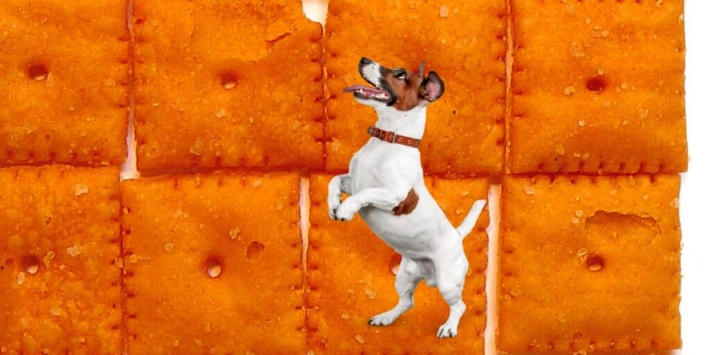can dogs eat cheez its