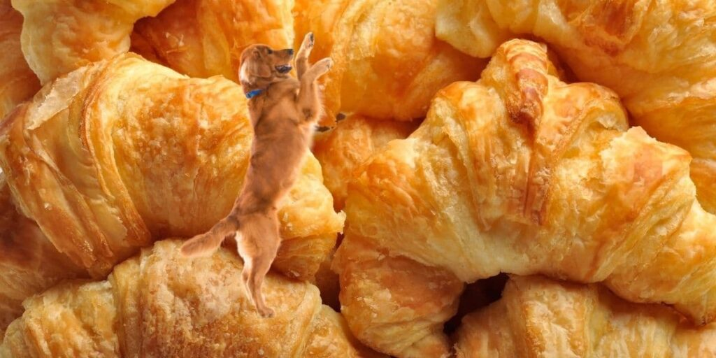 can dogs eat croissants