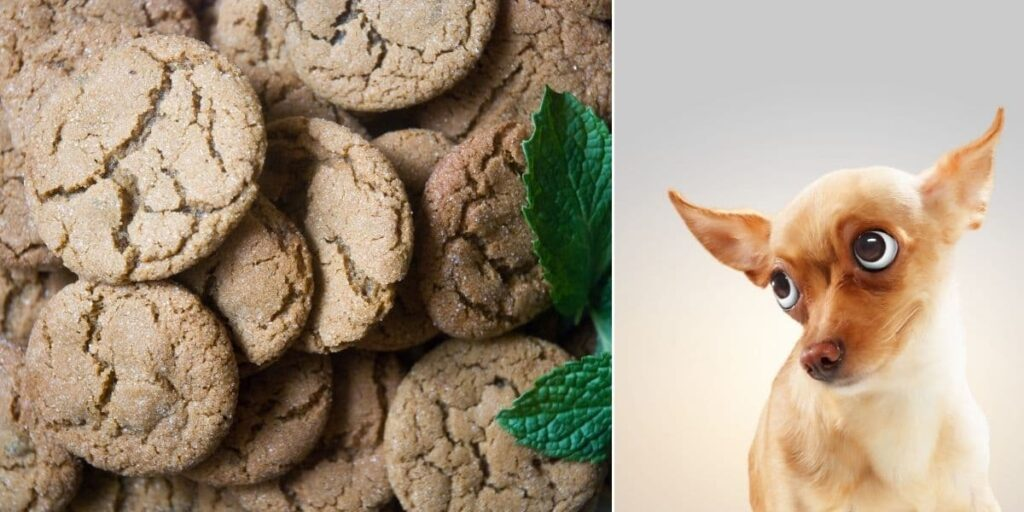 can dogs have ginger snaps