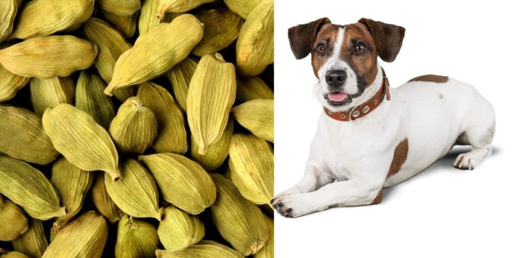 can dogs eat cardamom