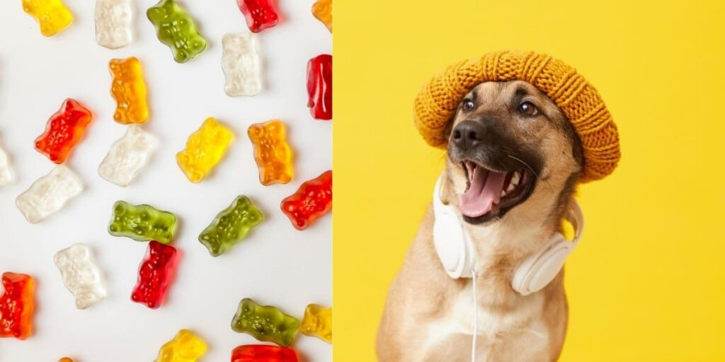 can dogs eat gummy bears