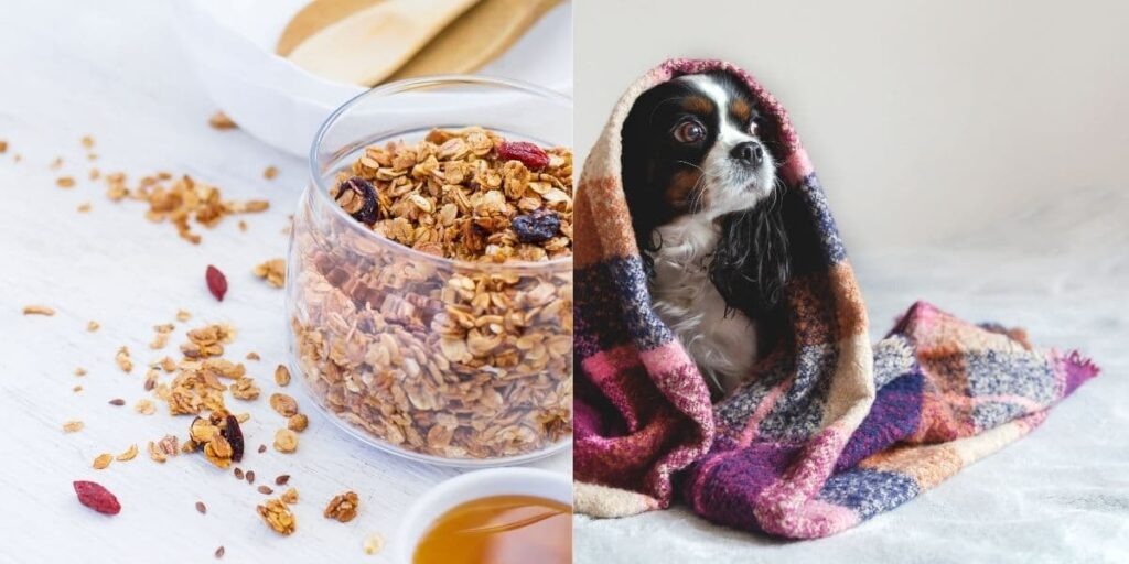 can dogs eat granola