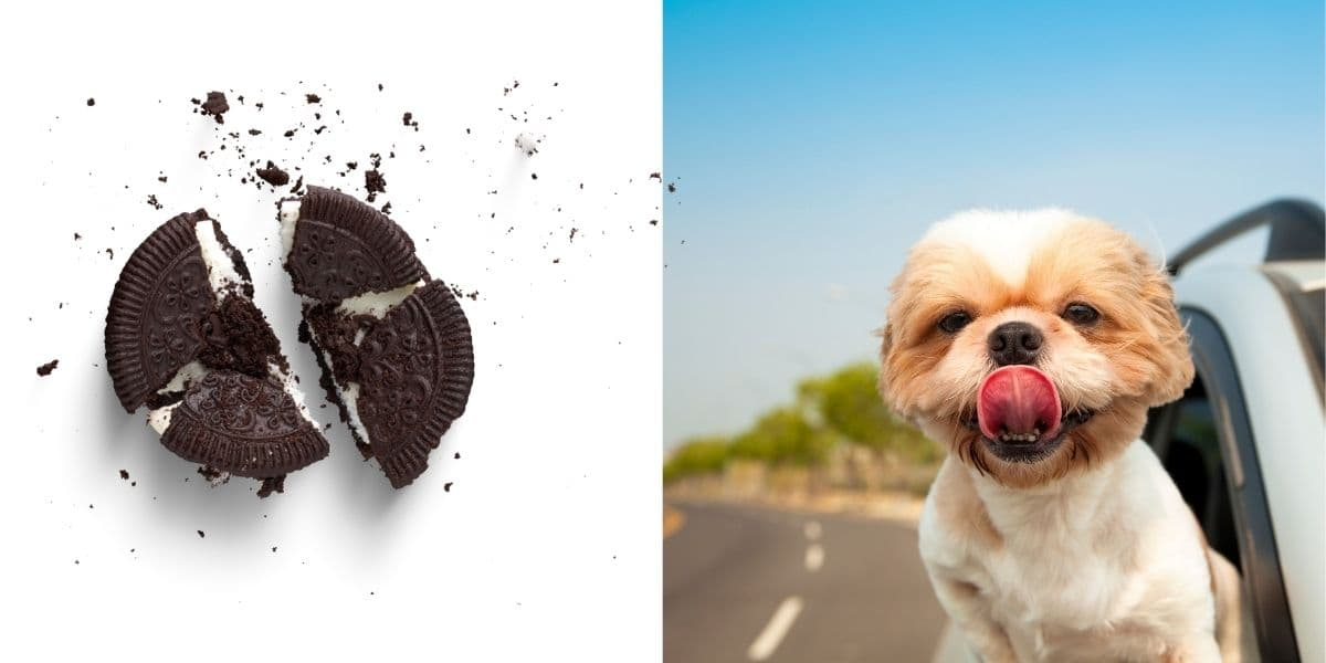 can dogs eat oreos