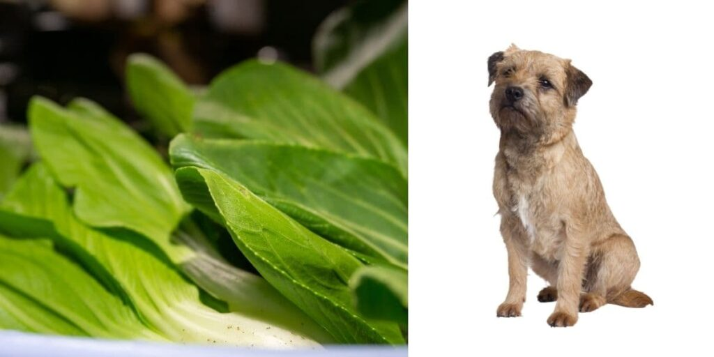 can dogs eat mustard greens