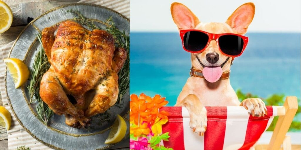 can dogs eat rotisserie chicken