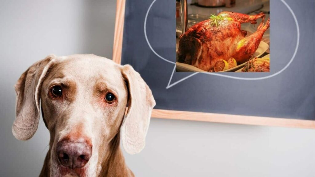 can dogs eat cooked turkey necks