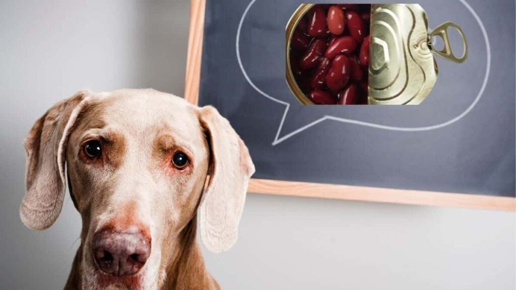 What canned food can dogs eat