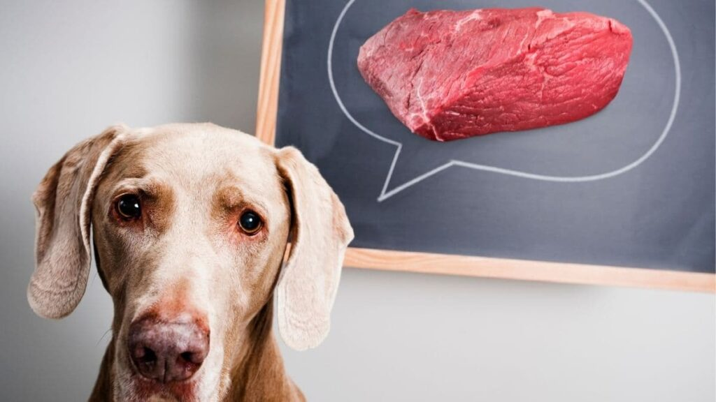 can dogs eat beef