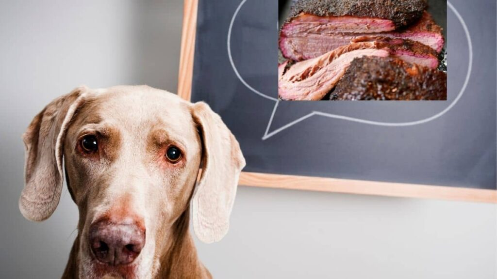 can dogs eat brisket