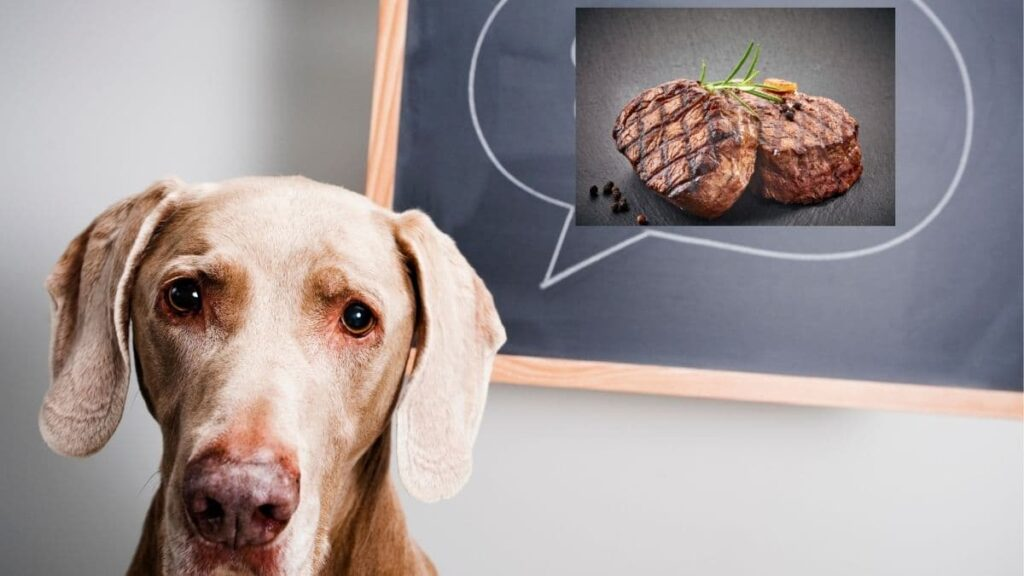 can puppies eat steak