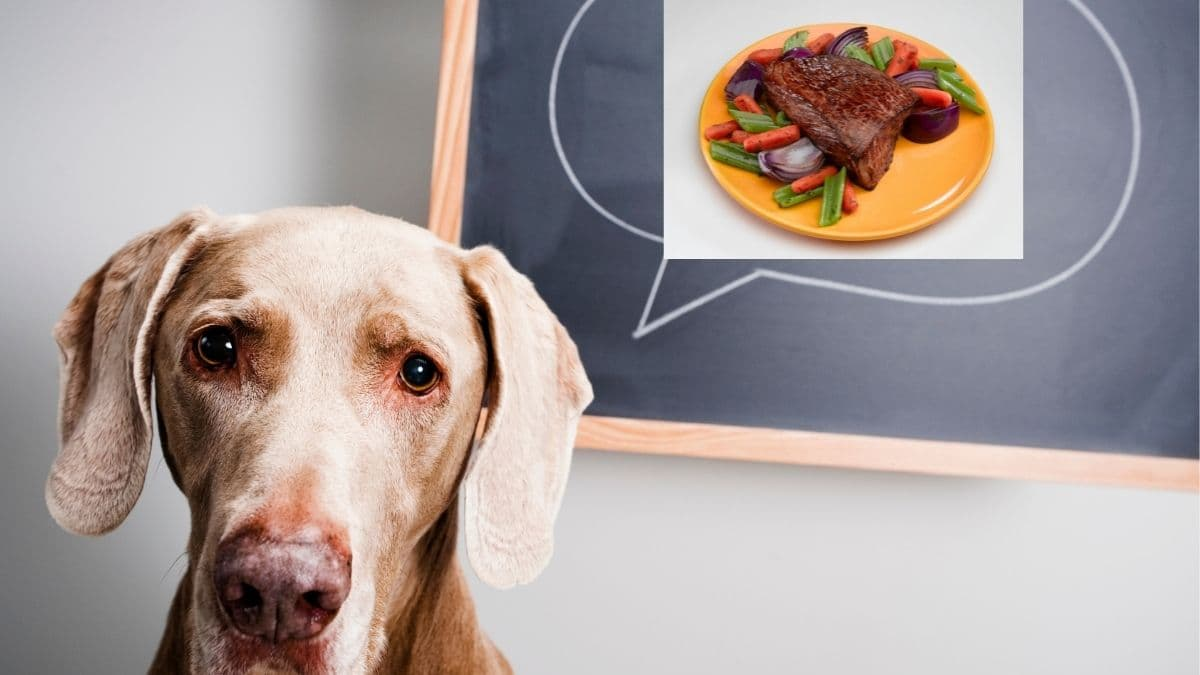 is roast beef good for dogs