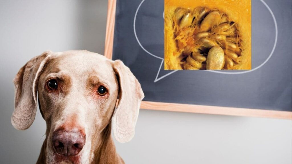 can dogs eat squash seeds
