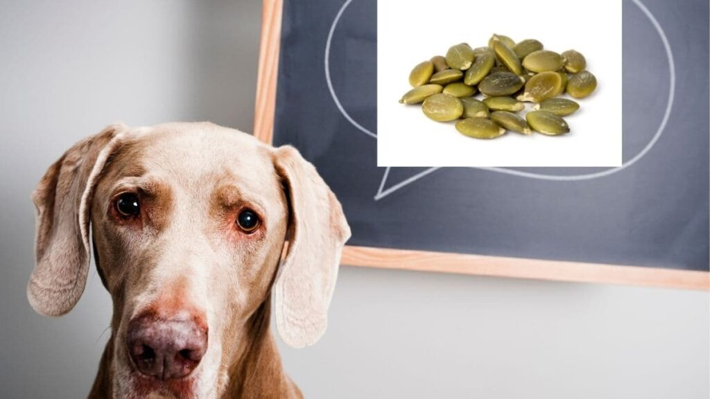 How long does it take for pumpkin seeds to kill parasites in dogs