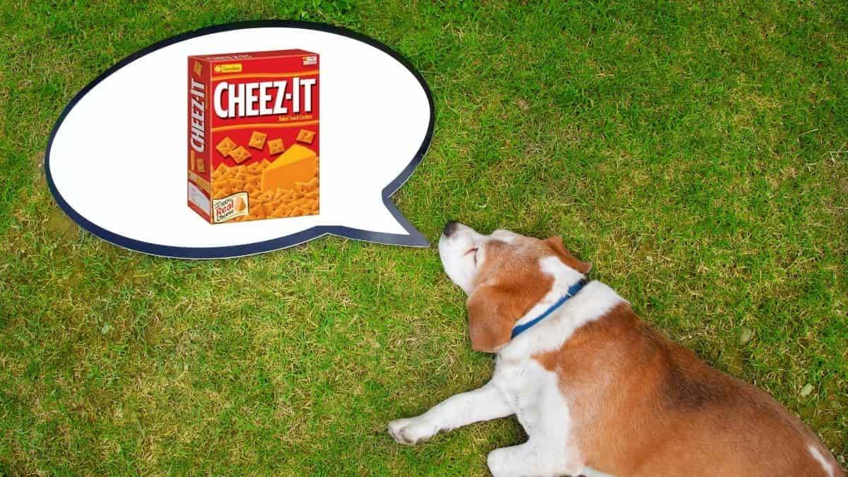 my dog ate cheez-its