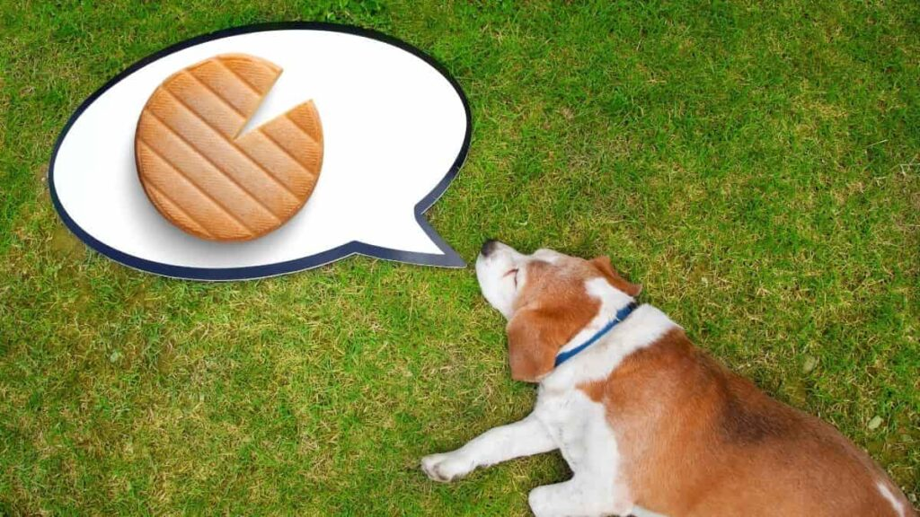 Are cheez its bad for dogs?