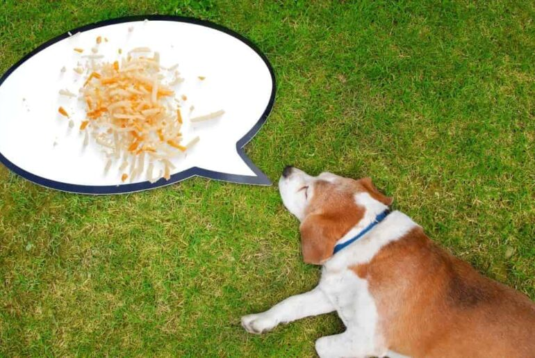 can dogs eat white cheddar cheez its