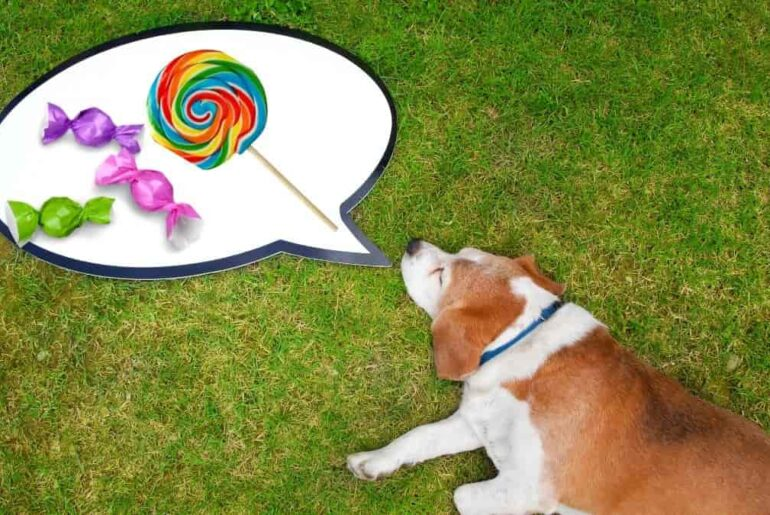 what candy can dogs eat