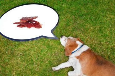 can dogs eat beef jerky sticks