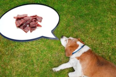can dogs eat beef jerky jack links