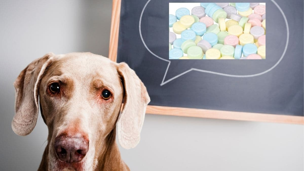 Can dogs eat sweet tarts
