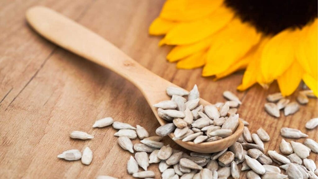 can dogs eat sunflower seeds