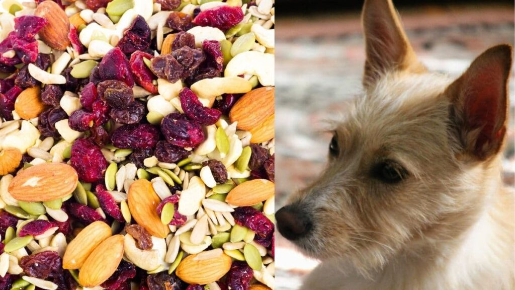 can dogs eat trail mix