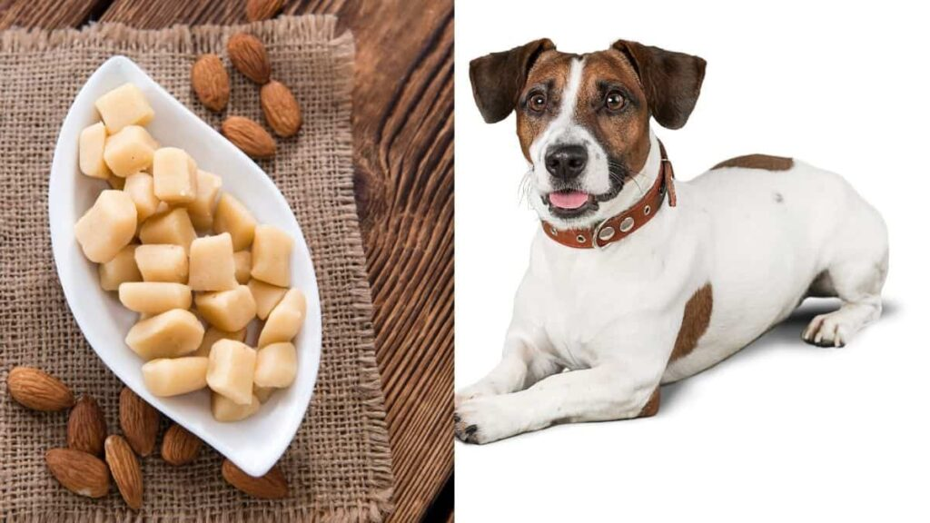 can dogs eat marzipan