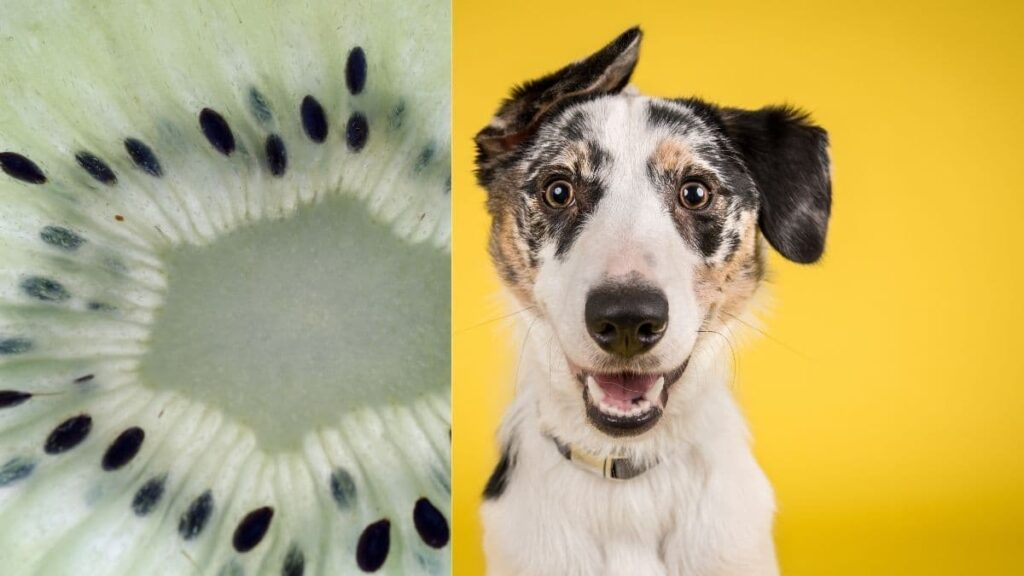 can dogs eat kiwi seeds