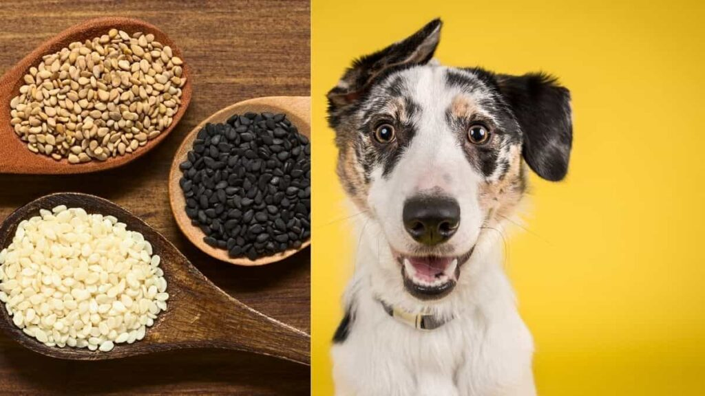 can dogs eat sesame seeds