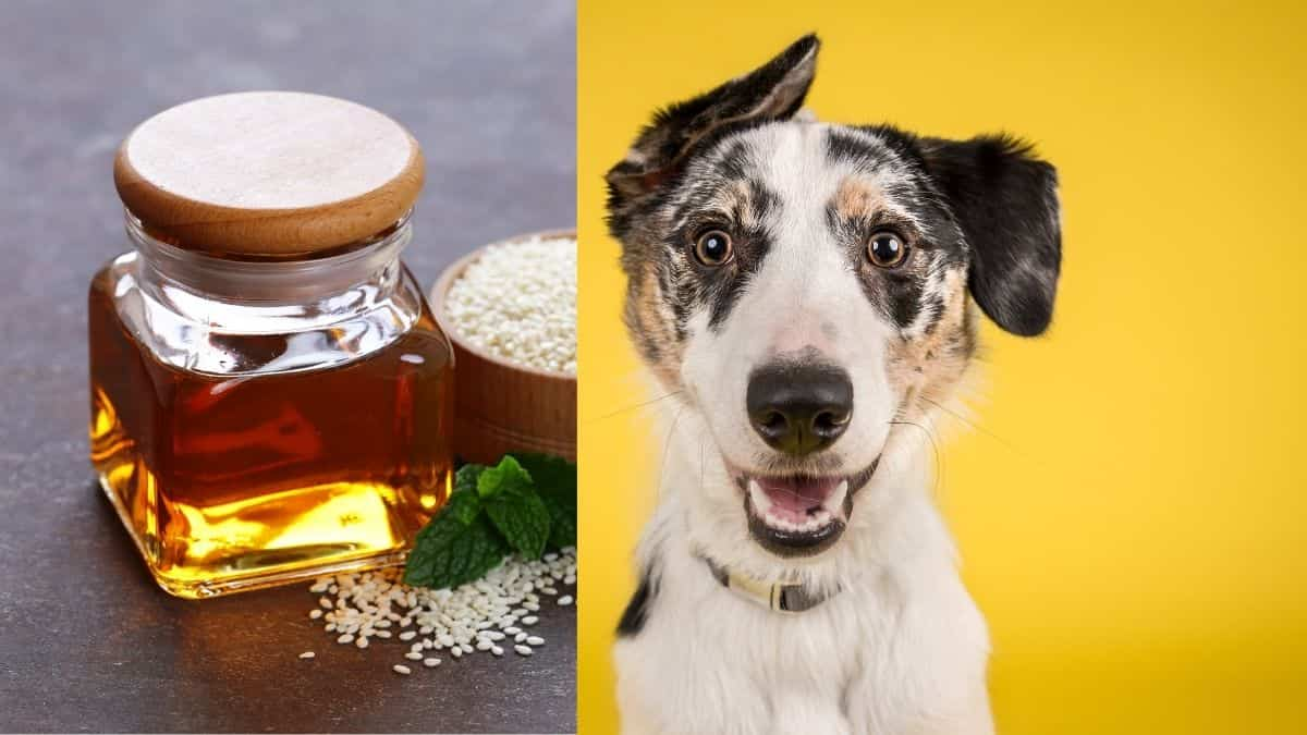 can dogs eat sesame oil