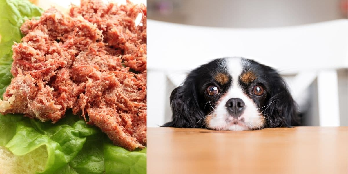 can dogs eat corned beef