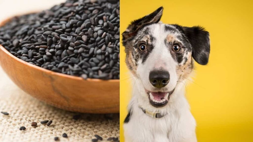 can dogs eat black sesame seeds